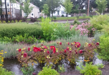 Bioswales lhelp control storm water bring beauty of nature to urban campus. Photo By Dave Everett