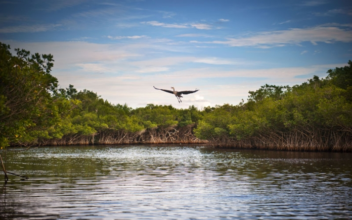 Blue Heron taking flight over a lake. Photo credit: shaferaphoto / Shutterstock